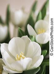 tulipanes, en, primer plano