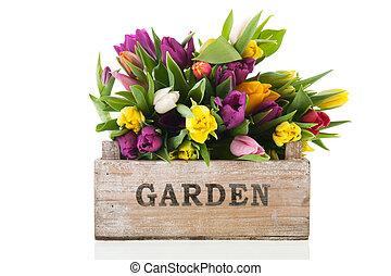 tulipanes, lleno, cajón, jardín
