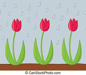 tulipanes, lluvia