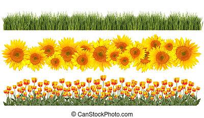 tulipanes, primavera, tema, girasoles, fronteras, pasto o ...