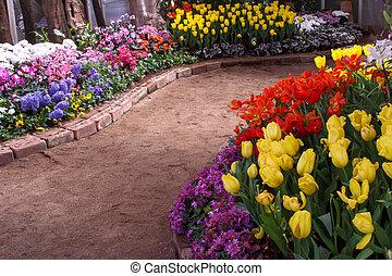 tulipanes, ser, cultivar arriba, y, exquisite., parques