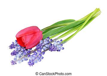 tulipano, giacinti, uva