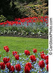 tulipano, giardino