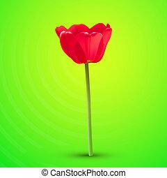 tulipano, vettore, fiore, rosso