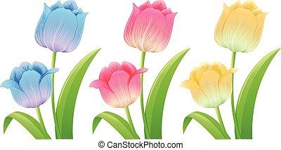 tulipany, różny, kolor, trzy