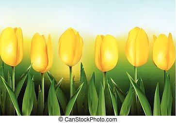 tulipany, tło, żółty