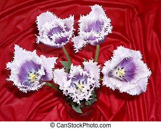 tulipe, 4