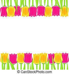 tulipe, clair, cadre, coloré