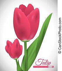 tulipe, fleur