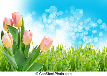 tulipe, fleurs