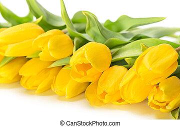 tulipe, fleurs, jaune