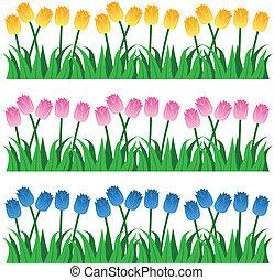 tulipe, rangées