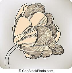 tulipe, vecteur, fleur, illustration., hand-drawing.