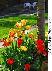 tulipes, à, a, maison