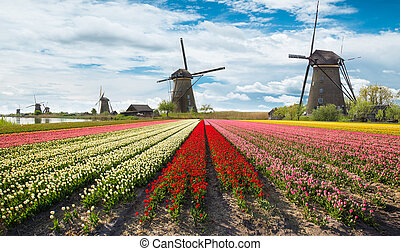 tulipes, éoliennes, hollandais, champ, vibrant