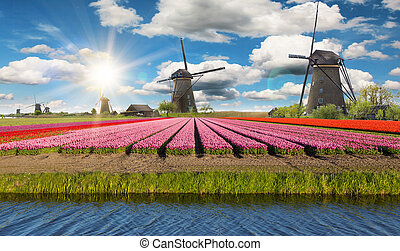 tulipes, éoliennes, hollandais, champ, vibrant