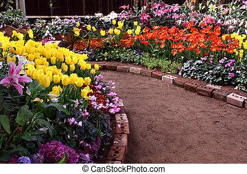 tulipes, are, grandi, et, exquisite., parcs
