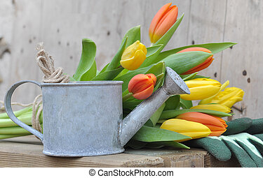 tulipes, arrosoire