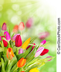 tulipes, bouquet, beau