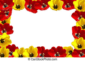 tulipes, cadre, fleurs