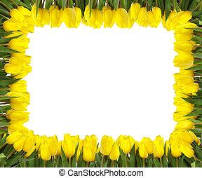 tulipes, cadre, jaune