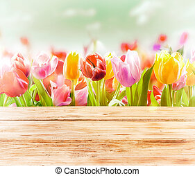 tulipes, coloré, rêveur, fond, printemps