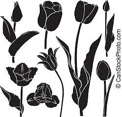 tulipes, ensemble, silhouette