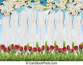 tulipes, fence., paysage, printemps