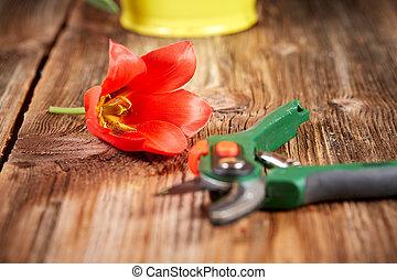 tulipes, fleur, seau, jaune rouge