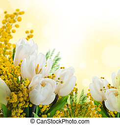 tulipes, fleurs blanches, fond, mimosa