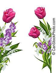 tulipes, fleurs blanches, isolé, fond