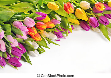 tulipes, fleurs, coloré