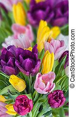 tulipes, fond, beau, fleurs