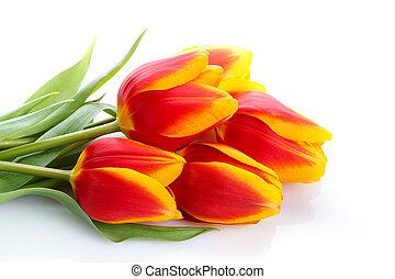 tulipes, fond blanc, tas