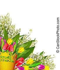 tulipes, isolé, arrière-plan., printemps, fleurs blanches