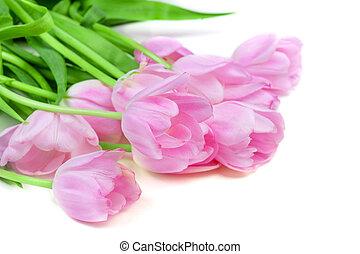 tulipes, mother?s, printemps, rose, isolé, fleurs blanches, paques, heureux, jour, card., arrière-plan.