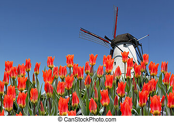 tulipes, moulin, paysage, hollandais