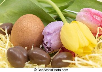 tulipes, oeufs, chocolat, closeup, poulet, paques