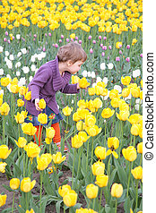tulipes, petite fille, champ