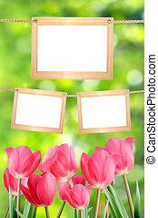 tulipes, photos., bokeh., arrière-plan vert, vide, cadres, ton, rouges