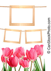tulipes, photos., isolé, white., fond, vide, cadres, ton, rouges