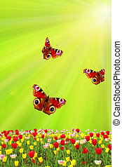 tulipes, printemps, contre, papillons, vert, soleil