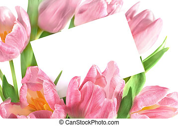 tulipes, rose
