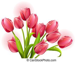 tulips, белый, isolated, задний план, гроздь