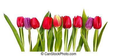 tulips, ряд
