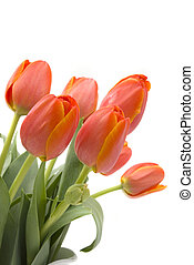 Tulips - A bouquet of elegant tulips in a beautiful pitcher...