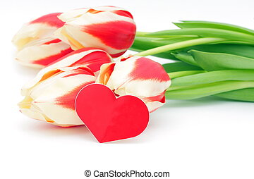 Tulips and heart