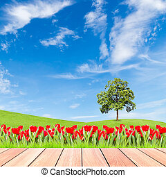 tulips and tree on green grass field with blue sky and  wood plank foreground