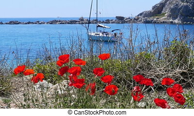 """tulips and yacht at blue voyage, knidos, datca, turkey"""