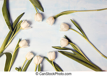 Tulips as a frame on blue background
